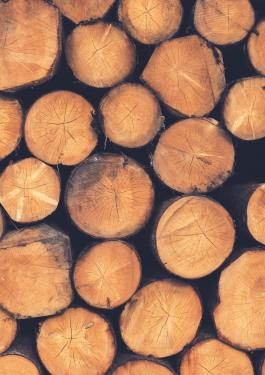 Forestry & Timber Certification